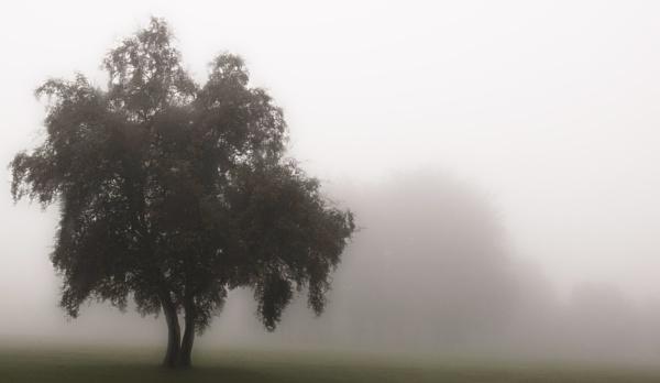 morning mist by agean