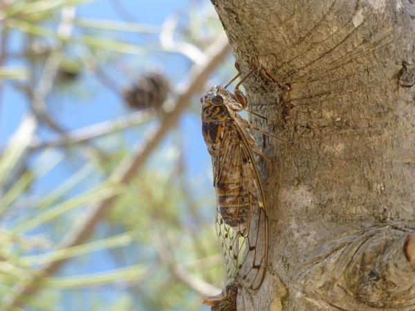 "A \""beastie\"" on a tree... by Chinga"