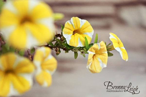 Summer\'s Last Goodbye by Brennak