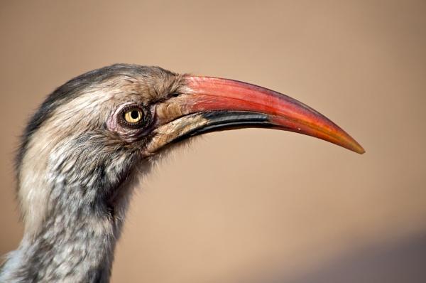 African Bird by janenewhitty