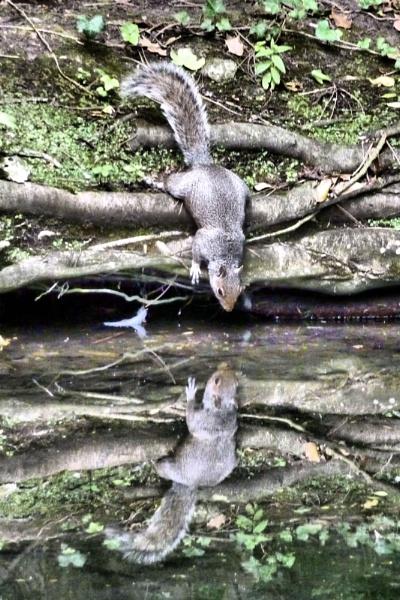 On Reflection! by MUMCAT