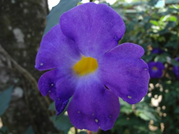 violet by beachnsand