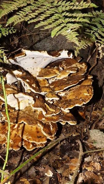 fungi by ZoeKemp