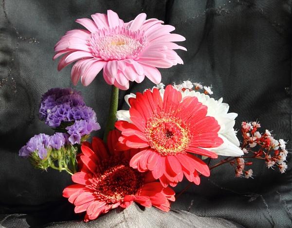 Flowers again by HuddersfieldHil