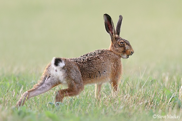 Hare-nibble Lecter by SteveMackay