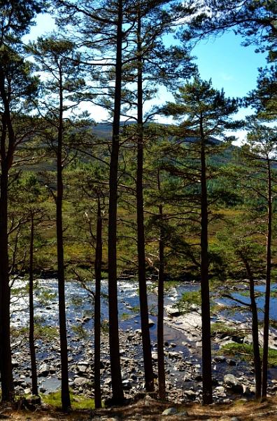 Through the trees by Sreidser08