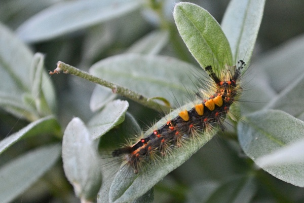 Colourful Caterpiller by TheBee