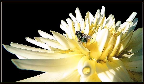 * * Greenbottle&Honey Bee * * by Rock
