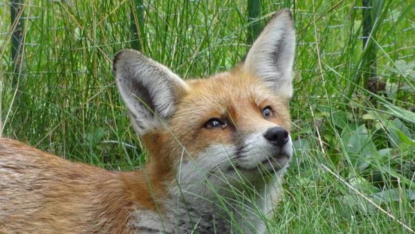 Foxy by xGei8ht