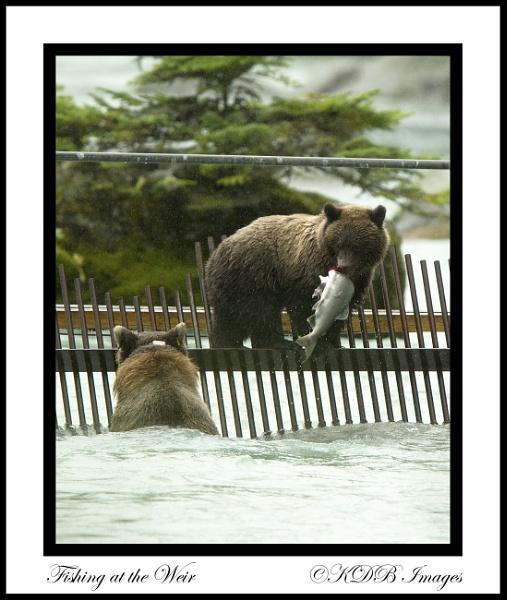 Alaska by BURNSIE