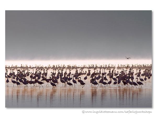 Nakuru Awakening by IngridVekemans