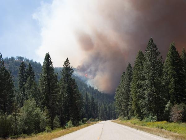 wildfire by wm