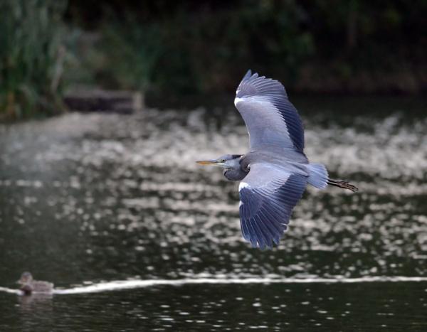 Heron by heron