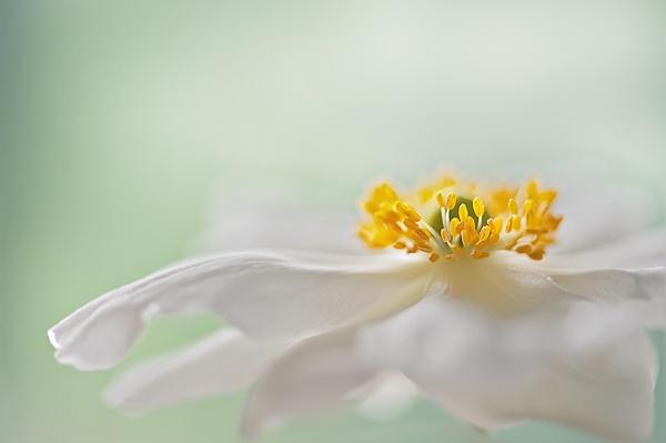 Floral Finale by jackyp