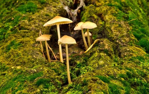 Fungi by dhandjh