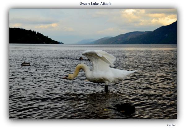 Swan Lake Attack by Cavolfiore