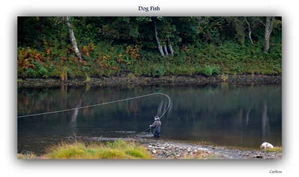 Dog Fish by Cavolfiore