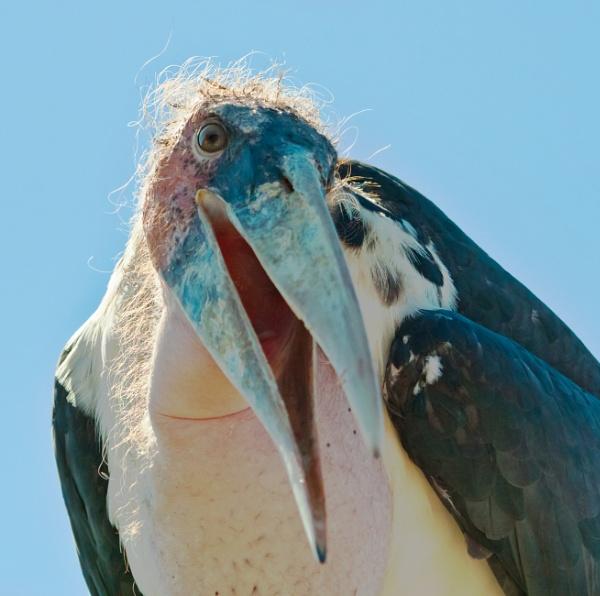 Ugly Bird by kel55