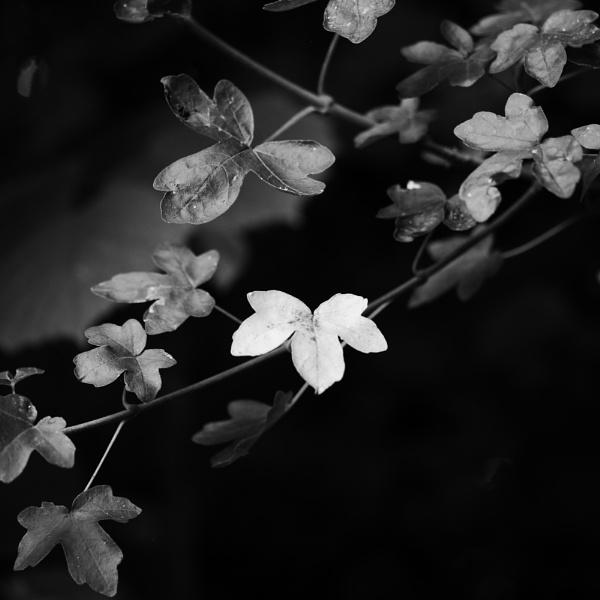 last glow by Griff2012