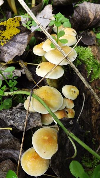 fungi trail by ZoeKemp