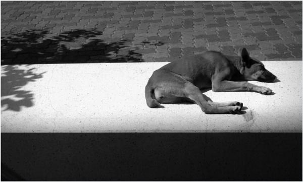 Lazy Sunday by Potra