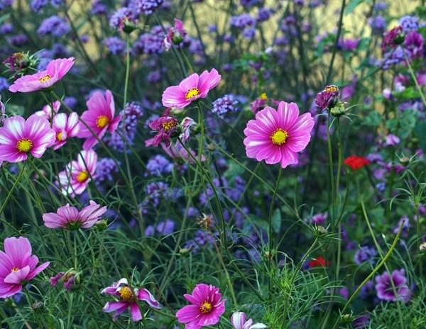 Garden by victorburnside
