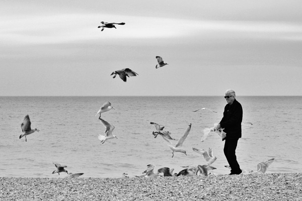 Feeding the Gulls by Kater2112
