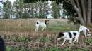 dog walk by connorpowis