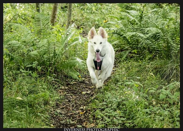 Born to Run - Through Woods... by jjmills