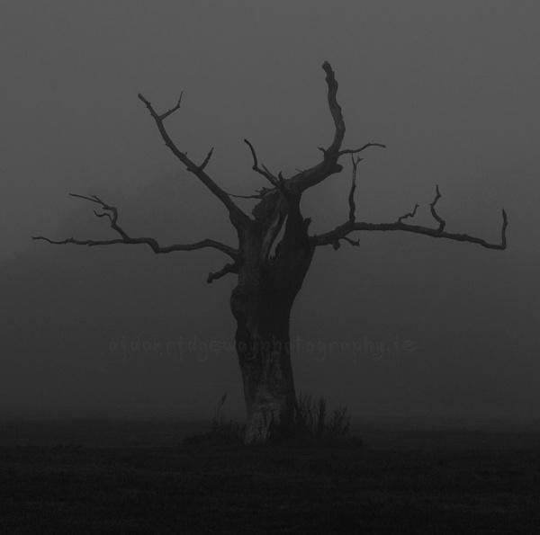 Hanging Tree. by Ridgeway
