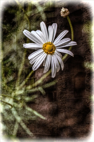 Daisy and Hardwick Old Hall by sable