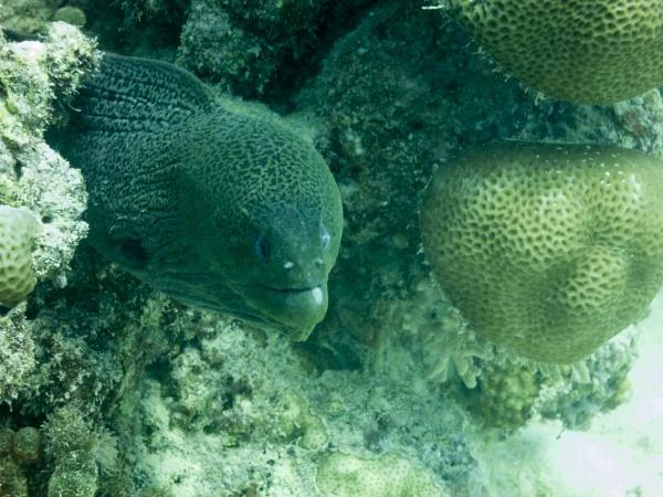 Red Sea Moray Eel by WorldInFocus