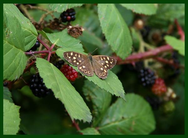 Flutter by Mr. Butterfly by Bufpuf2009