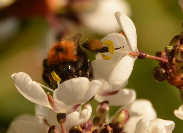 Busy Bee! by Margaret101
