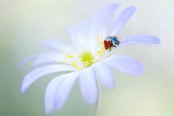 Flower Lady by jackyp