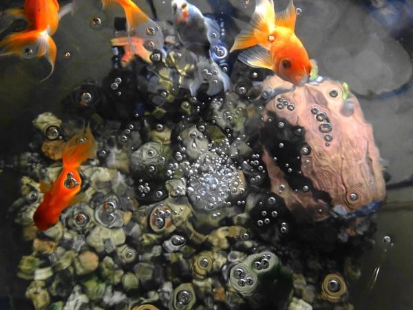 feeding my fish by christinecilia