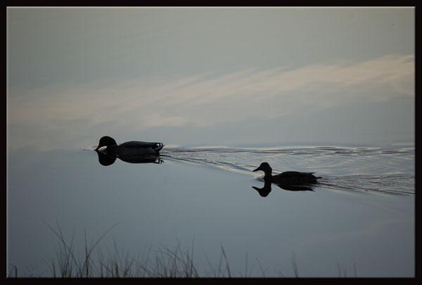 Romantic evening swim! by minamahal