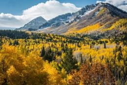 Alpine Colors
