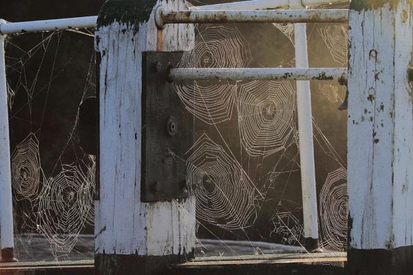 Cobwebs by Adamzy
