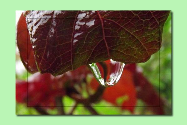 autumnal rain by ZoeKemp