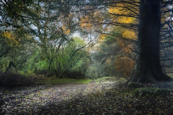 Autumn Dartmoor by Devon_Sunsets