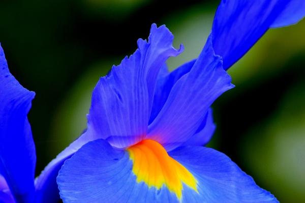 Yellowheart ! by fotobee