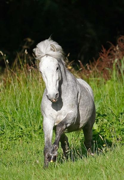 The beautiful Merlin having fun in the field by BlueInfinity