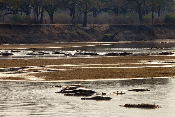 Hippo Landscape by vickyf