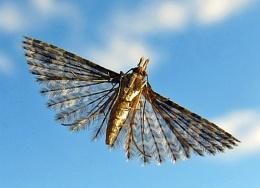 Moth Plumage