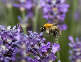 Stop Dead Bee