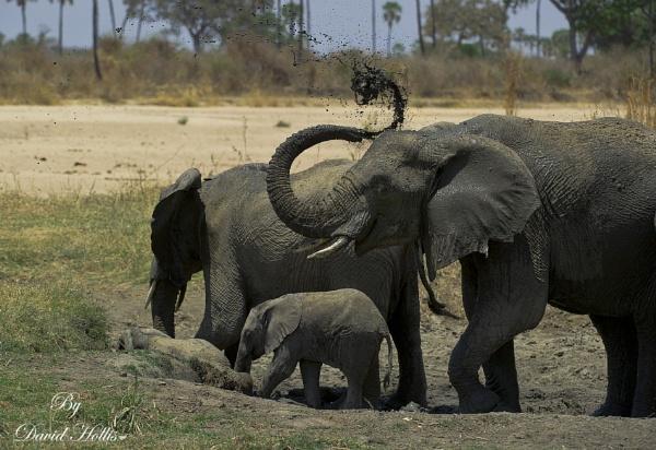 Elephants mud bath by ugly