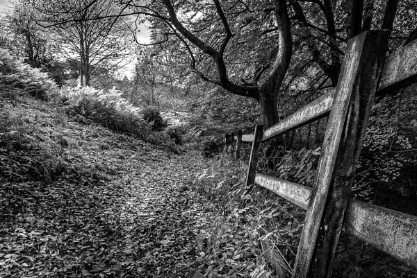 Fence by Kenfromsot