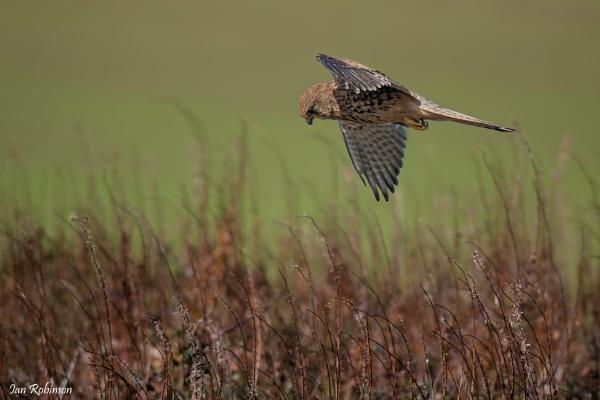 Hunting Ground by ianrobinson