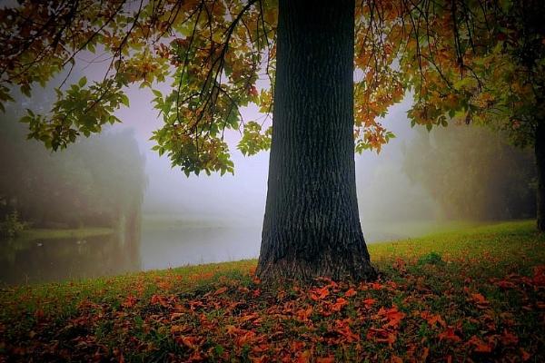 revelation autumn by atenytom
